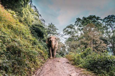 cosa vedere nel nord della thailandia