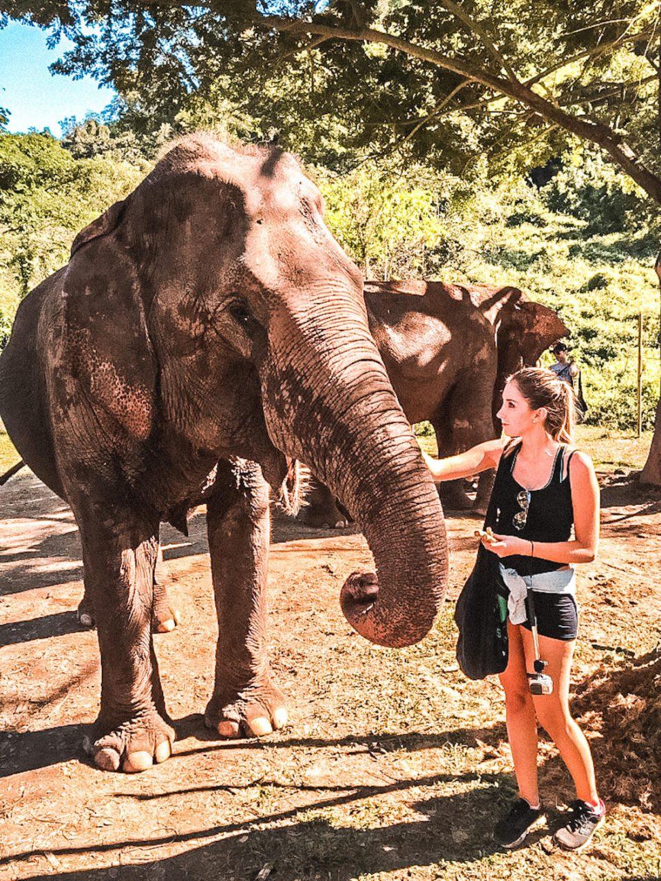cosa vedere nel nord della thailandia elefanti