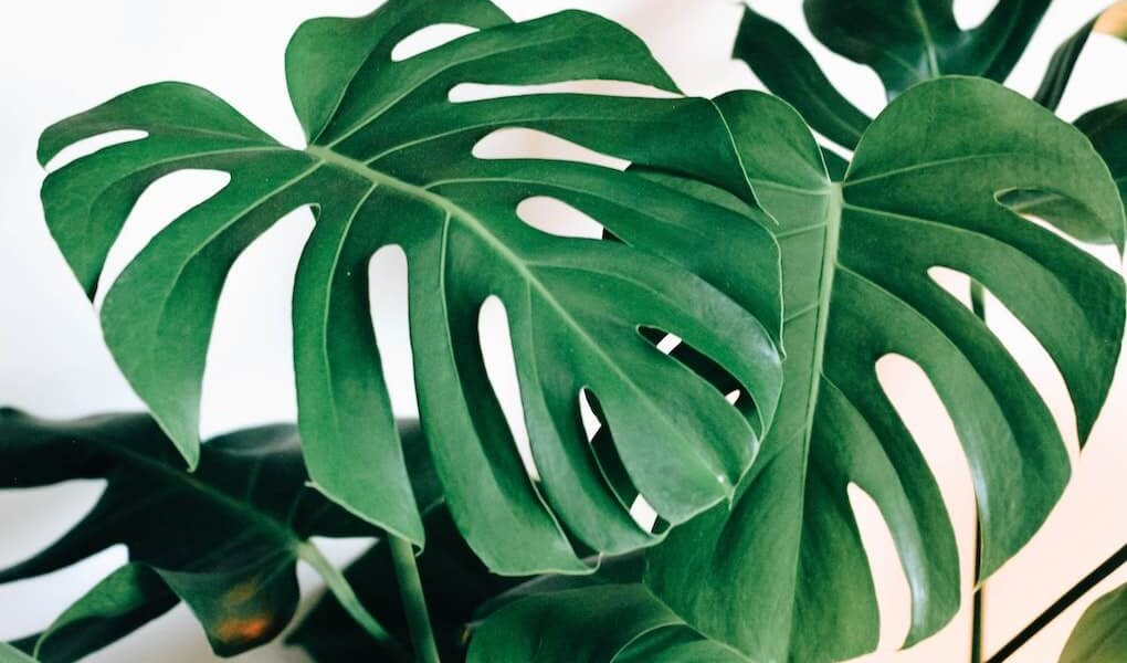piante da appartamento facili